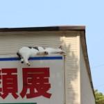 車中泊でのベッドメイキング4つの方法~基本編~