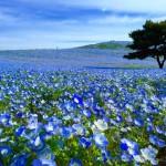 【車中泊旅プラン】幻想的な丘を撮影する~茨城県・国営ひたち海浜公園~